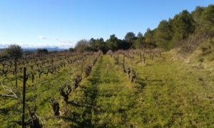 Vignoble en certification HVE