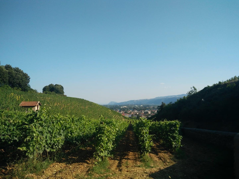Vue des vignes de Tain-l'Hermitage