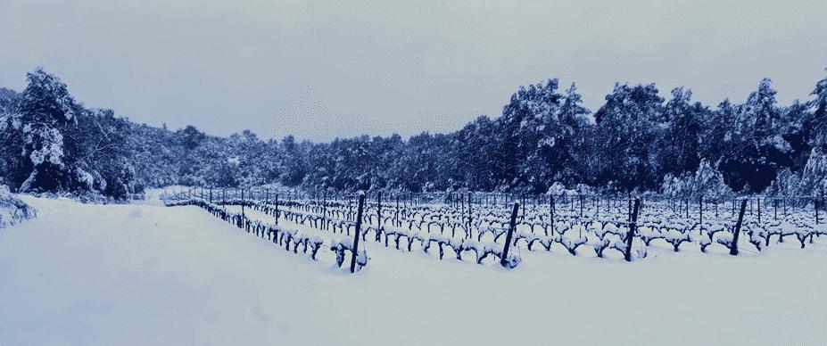 Neige dans les vignes à proximité de Montpellier
